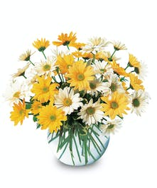 Simply Fresh Cut Vased Daisies