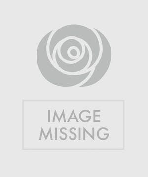 Roses red roses pink roses lavender roses long stemmed pink roses mightylinksfo