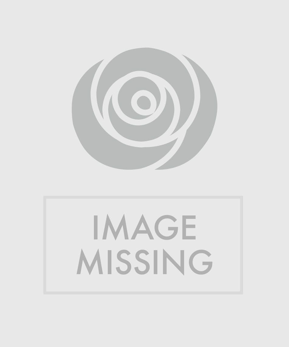 Two Dozen Pink Roses Roses Memphis Tn Pughss Flowers