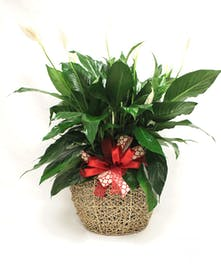 green plant in jute container