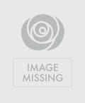 True Love Roses Valentine's Special