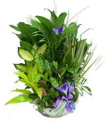abundant green plants