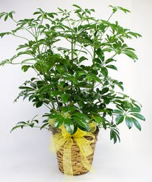 plant in basket